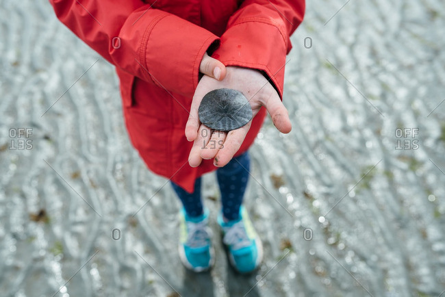 Girl holding sand dollar on a beach