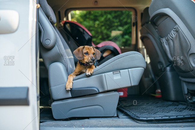 Puppy waiting in the backseat of a minivan
