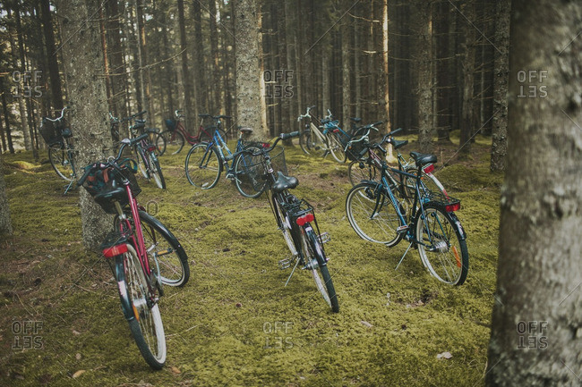 September 20, 2014: September 20, 2014: Group of bicycles parked in the woods