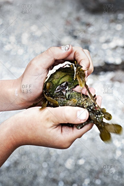 Hands holding shell and seaweed
