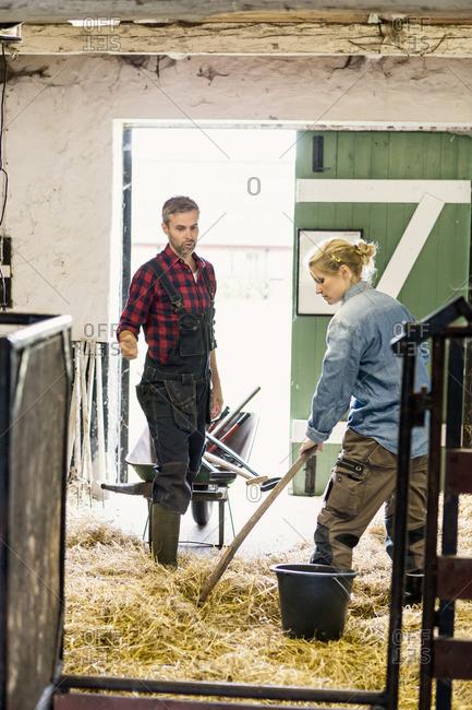 Man and woman spreading hay at barn