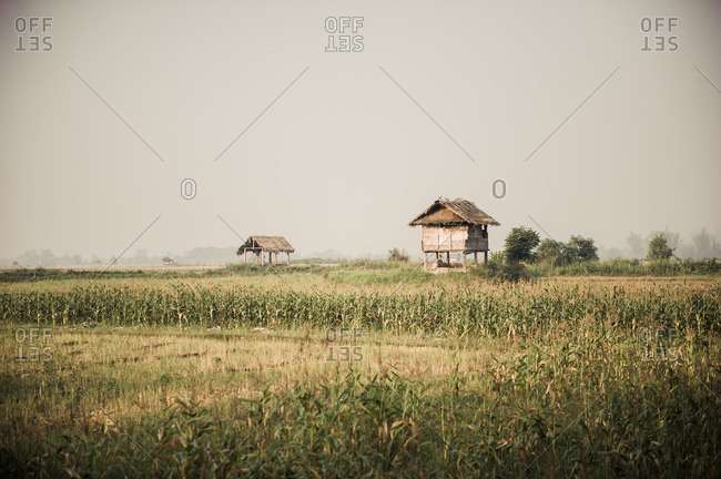 Hut in a cornfield in Laos