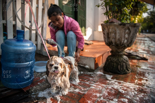 Luang Prabang, Laos, Asia - April 29, 2012: Girl bathing small dog outside