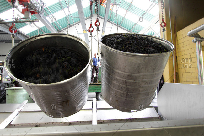 Containers of grapes in industrial wine cellar