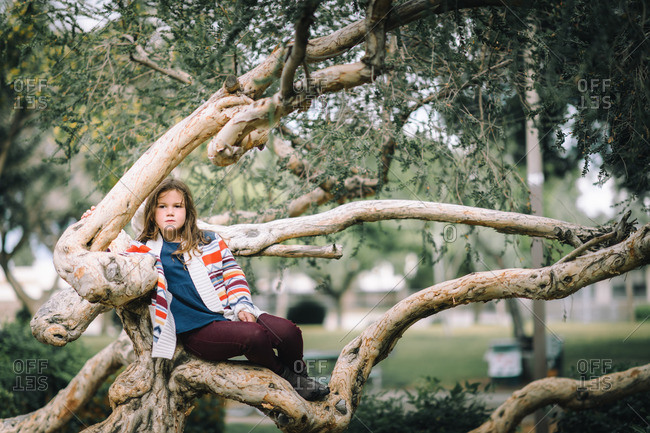 Girl posing on a tree in a local park