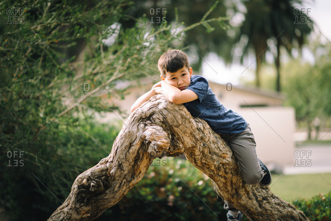 Boy resting on a tree in a local park