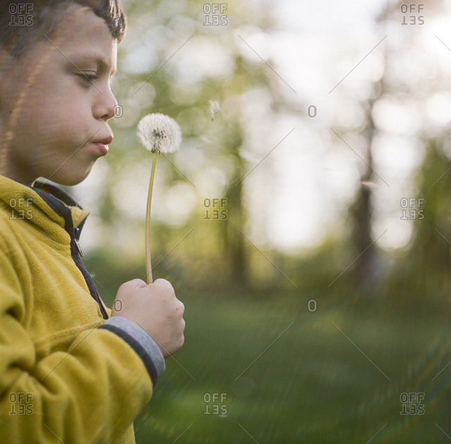 Boy blowing on dandelion plant