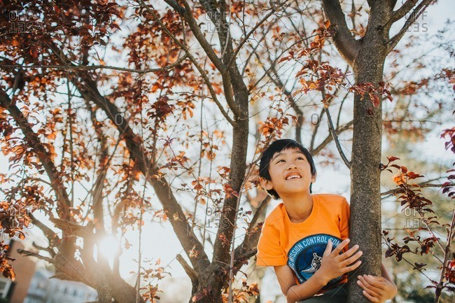 Boy playing in a tree