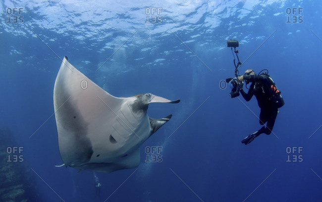 Photographer captures picture of Pacific manta (Manta hamiltoni)