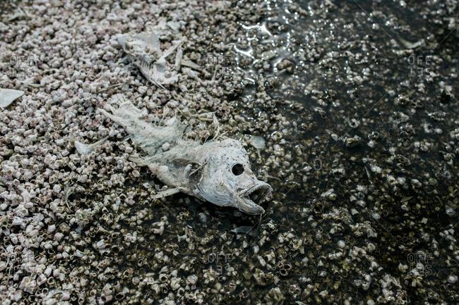 Close-up of a dead fish