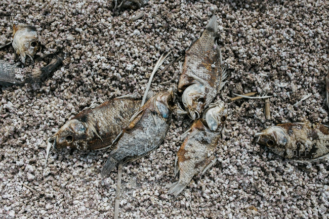 Close-up of dead fish on a beach