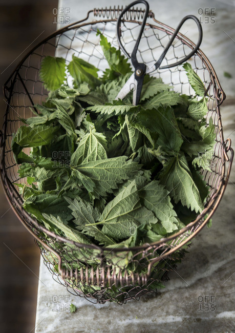 Stinging nettle in a wire basket