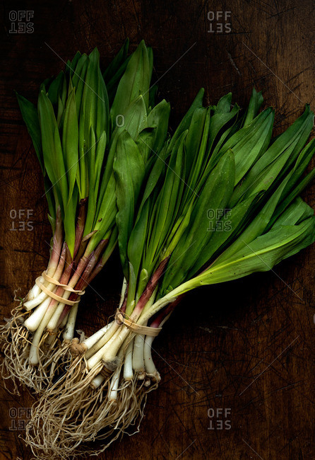 Two bunches of fresh picked ramps