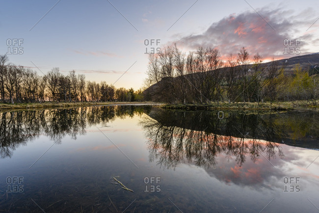 Bare trees reflected in a shallow pond at sunset