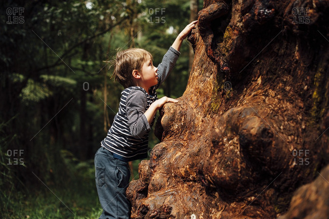 Little boy climbing a large knotty tree trunk