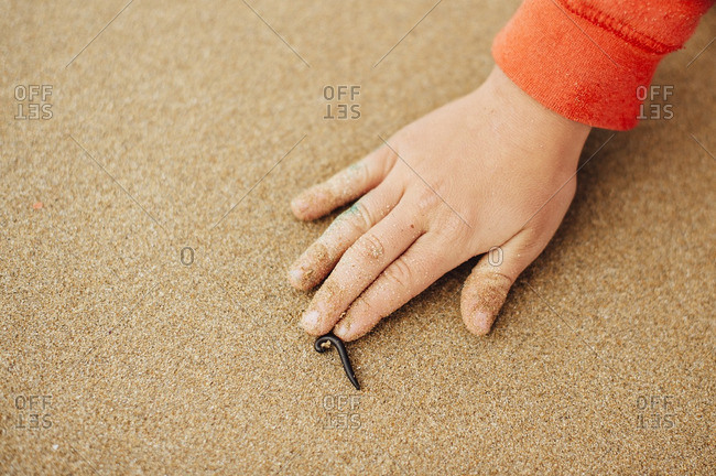 Hand of a boy touching a millipede on beach sand