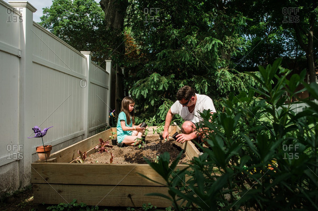 Man and his daughter planting garden in raised bed