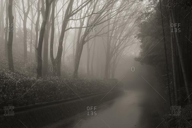 Misty mountain road, Japan