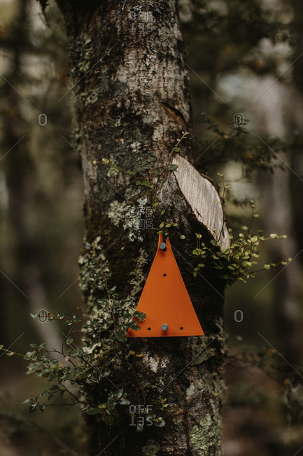 Trail marker on tree trunk