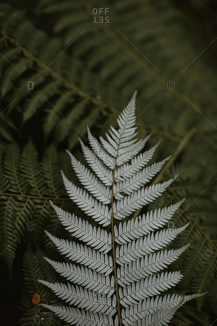 A fern leaf in close up