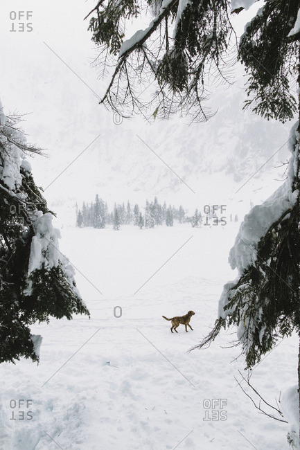 Dog in snowy mountain setting