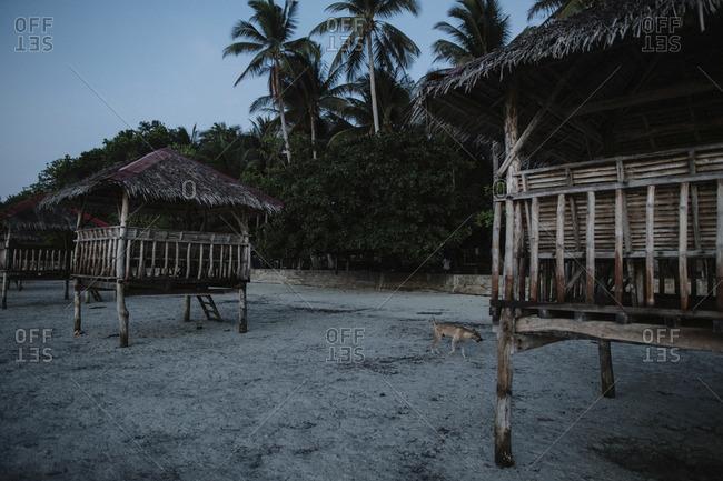 Dog near beach structures, Philippines