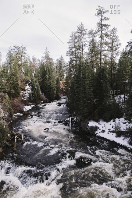 River rapids in winter woods