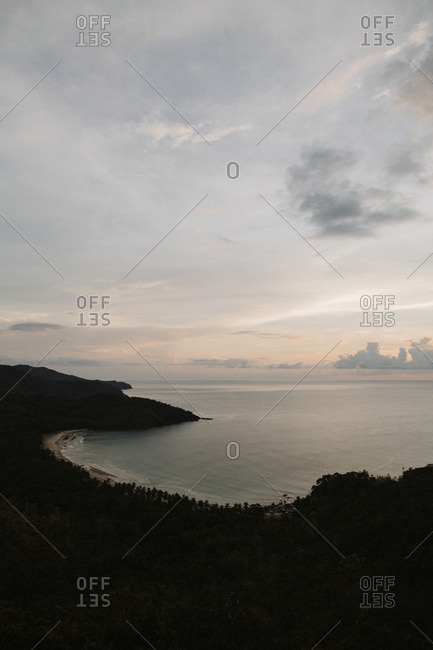 Forest coastline along sea