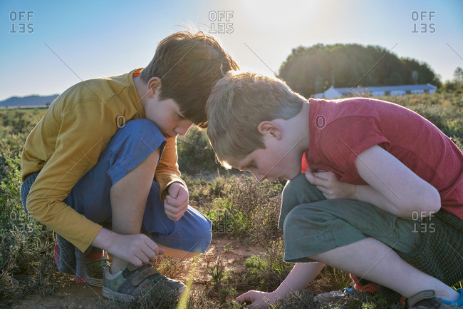 Brothers inspecting something on the ground between scrubland vegetation