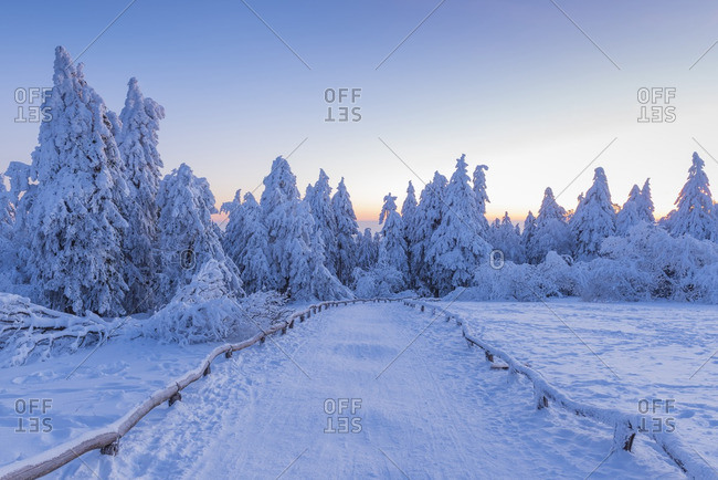 Snow Covered Winter Landscape with Path at Dawn, Grosser Feldberg, Frankfurt, Taunus, Hesse, Germany