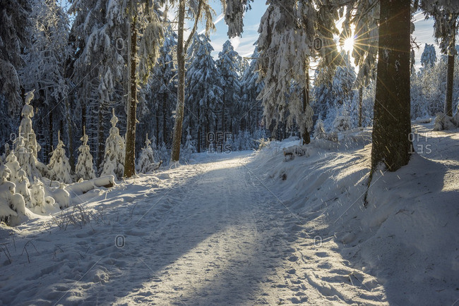 Snow Covered Winter Forest with Path and Sun, Grosser Feldberg, Frankfurt, Taunus, Hesse, Germany
