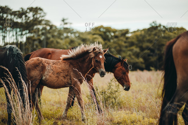 Wild horse and foal grazing in a field