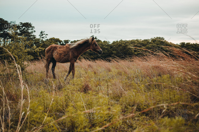 Wild horse standing in a field of grass