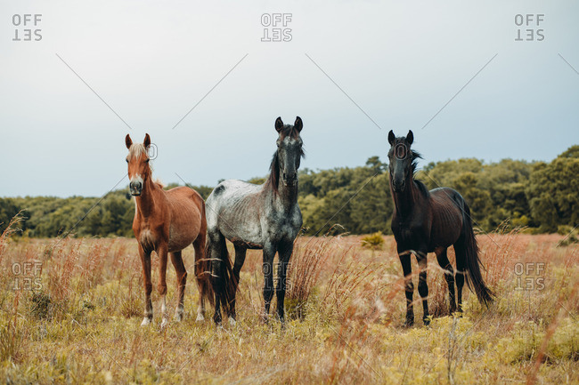 Three wild horses standing in a meadow