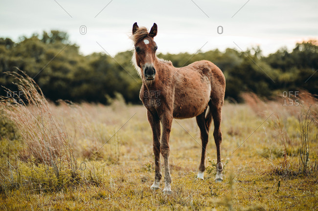 Wild horse standing alone in a field of grass