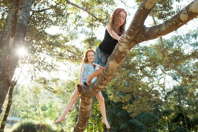 Two young girls climbing a tree