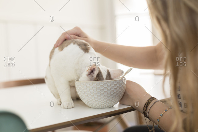 Woman petting cat while it eats from bowl