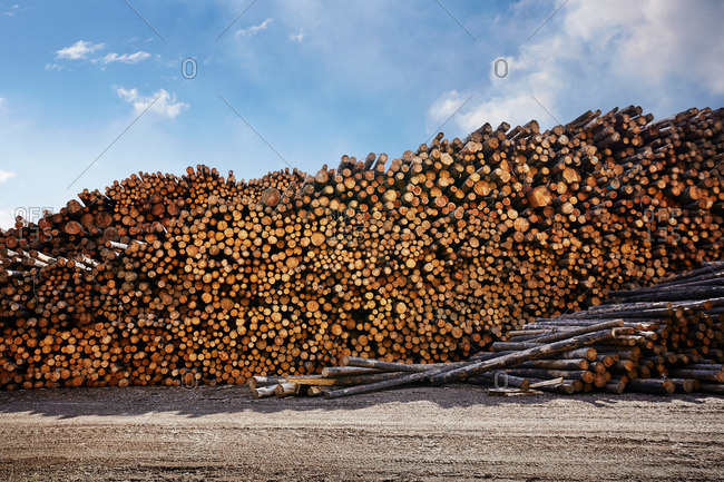 Large stack of logged timber in timber yard