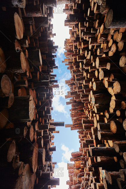 Low angle view of stacked timber in timber yard