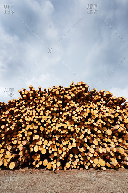 Stacked freshly logged timber in timber yard