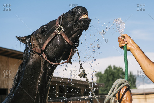 Person giving horse a bath with a hose