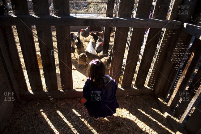 Little girl looking into a chicken coop