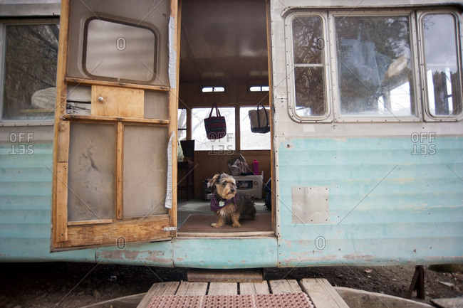 Dog standing in doorway of a trailer