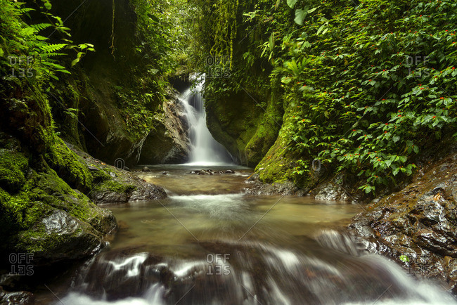 Waterfall and creek running through a lush green forest