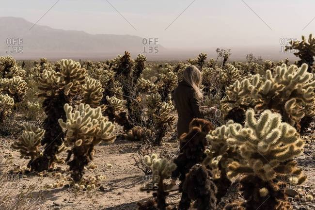 Woman walking through a desert surrounded by jumping cholla