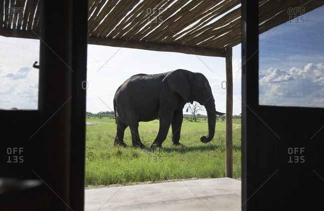 Elephant photo from the Offset Collection