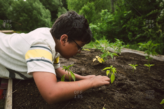 Boy helping plant seedlings in a raised bed garden