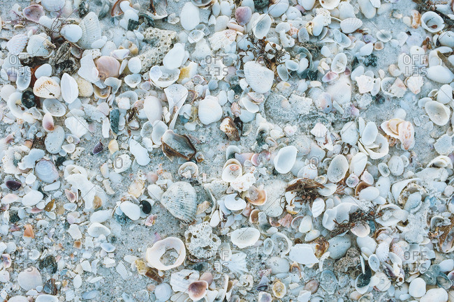 Numerous seashells on the beach