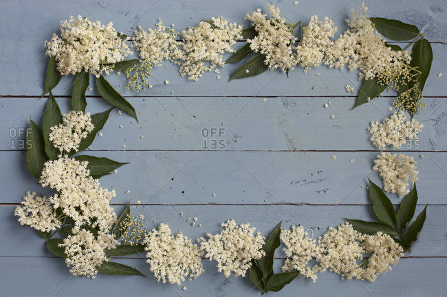 Elder flowers arranged in rectangle