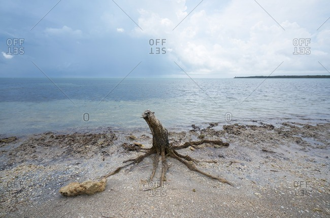 Dead tree trunk along a Florida shoreline